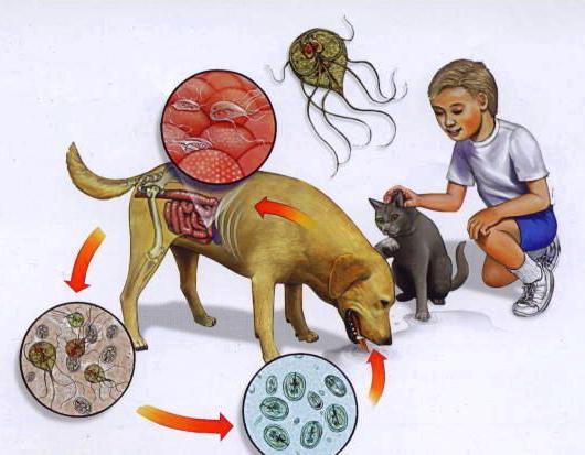 заразиться паразитами человека человеку