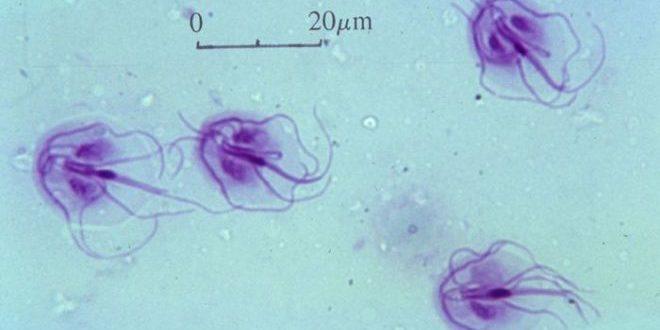 Пути заражения лямблиозом — Медицинский портал Parazit.expert