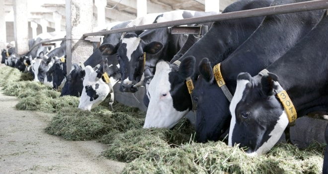 питание коров-min