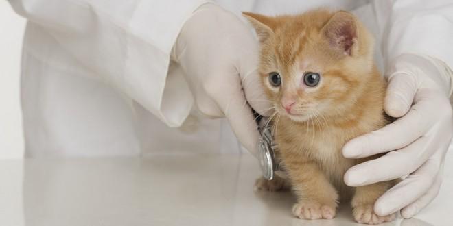 Азинокс в ветеринарии