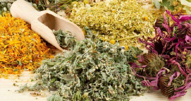Травы от глистов и паразитов у человека: рецепты, правила сбора