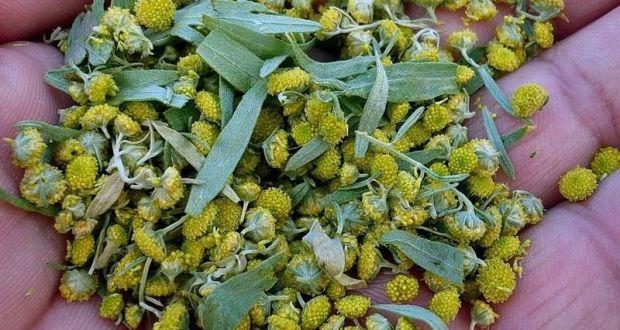 цветы полыни
