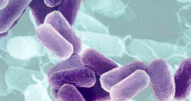 Уреаплазма парвум: причини, симптоми, діагностика, лікування, профілактика » журнал здоров'я iHealth