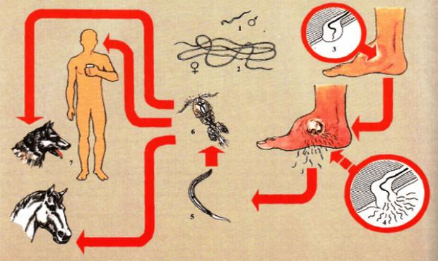 жизненный цикл ришты