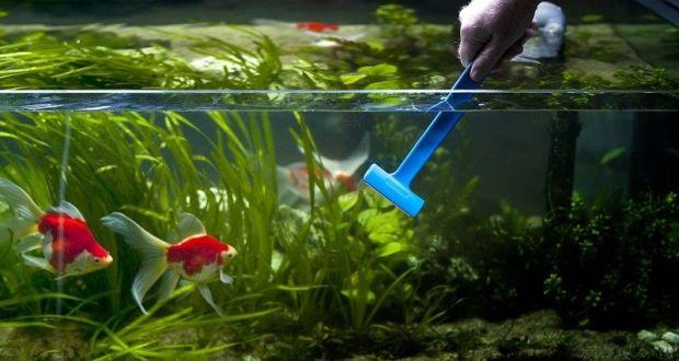 нитчатка в аквариуме