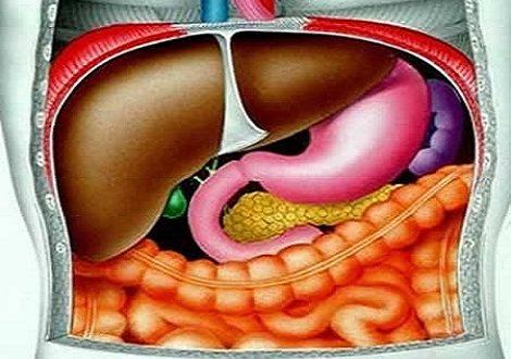 Глисты в печени человека симптомы