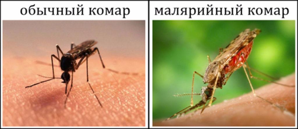 простой-комар-и-малярийный-1024x446